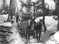 horses pulling sleigh on winter road